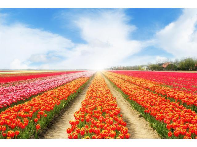 Praca w Holandii!! Kwiaty, sadzonki!! Bez doświadczenia!!